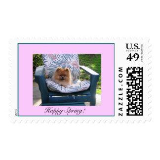 ¡Primavera feliz de Pomeranian