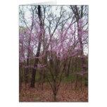 Primavera feliz/Redbud - tarjeta de felicitación