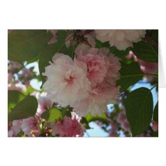 Primavera floreciente doble del cerezo I floral Tarjeta De Felicitación