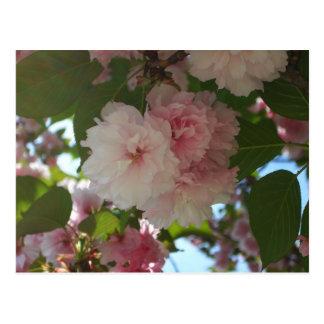 Primavera floreciente doble del cerezo I floral Tarjetas Postales
