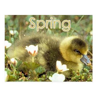 Primavera Gosling Postal