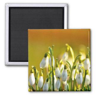 Primavera - imán