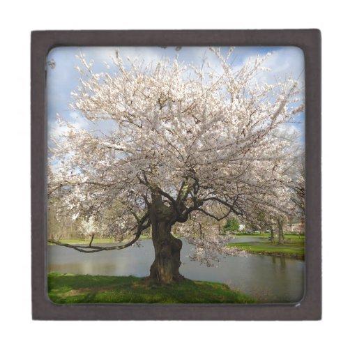 Primavera por el río caja de regalo de calidad