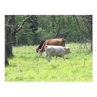 Primavera que pasta en Luisiana Postal