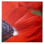 Primavera roja de la amapola floral azulejo
