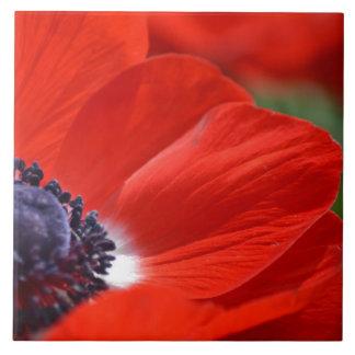 Primavera roja de la amapola floral azulejo cuadrado grande