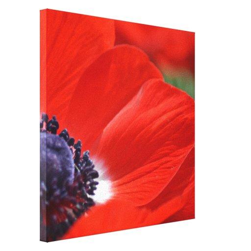 Primavera roja de la amapola floral lona envuelta para galerias