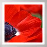 Primavera roja de la amapola floral posters