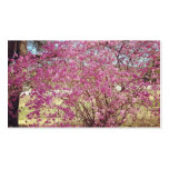 Primavera rosada plantilla de tarjeta de visita