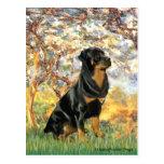 Primavera - Rottweiler (#5) Postal
