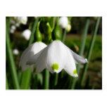 Primavera Snowdrops Postal