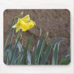 ¡Primavera! Tapete De Ratones