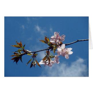 Primavera Tarjeta Pequeña