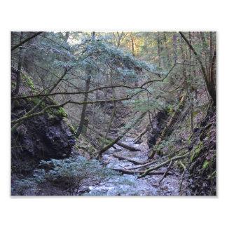 Primavera temprana en el bosque. Impresión de la f Impresiones Fotográficas