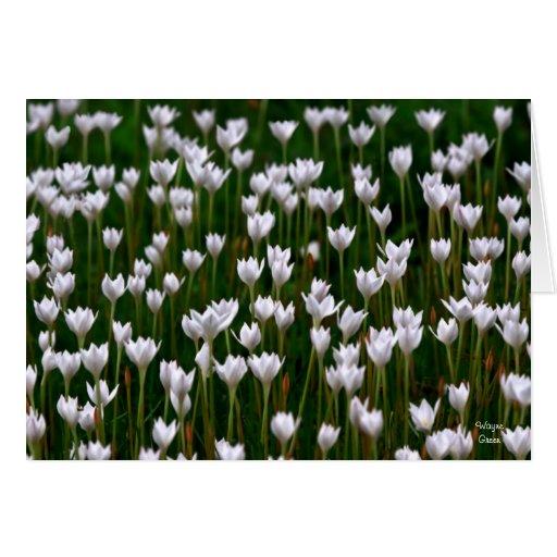 Primavera temprana - Tejas Tarjeta De Felicitación