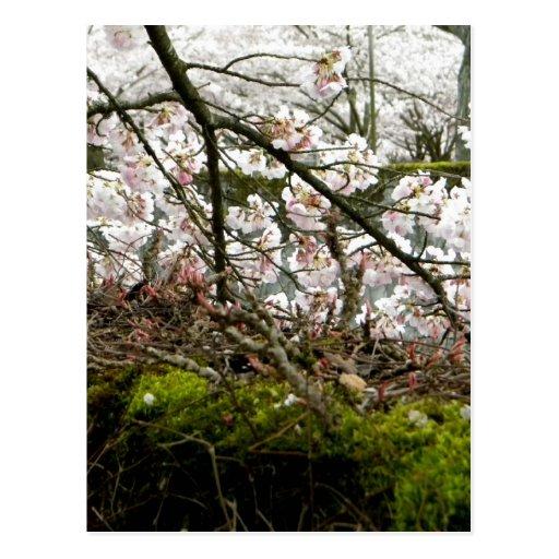 Primavera y musgo tarjeta postal