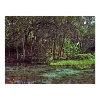 Primaveras del arco iris, la Florida Cojinete