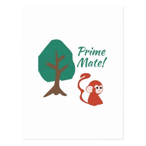 Prime Mate Post Cards