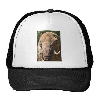 Primer 2 del elefante gorros