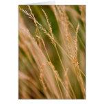 Primer alto de la pradera de la hierba (tarjeta)