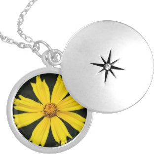 Primer amarillo de la flor del cosmos collar redondo