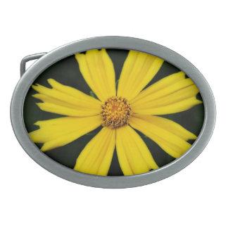 Primer amarillo de la flor del cosmos hebillas cinturón ovales
