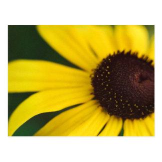 Primer amarillo de la flor tarjetas postales