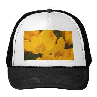 Primer amarillo de las azafranes gorras de camionero