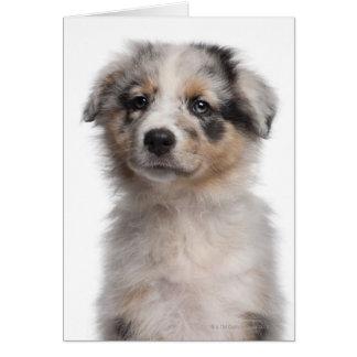 Primer australiano azul del perrito del pastor de tarjeta de felicitación