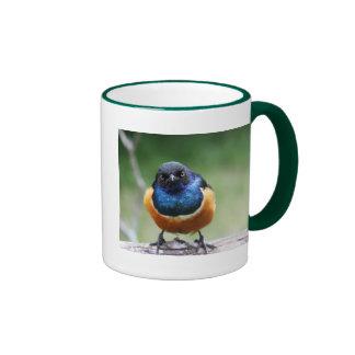 Primer azul curioso de la foto del pájaro tazas de café