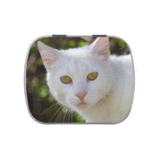 Primer blanco del gato frascos de caramelos