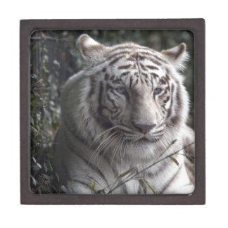 Primer blanco del tigre cajas de regalo de calidad