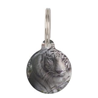 Primer blanco del tigre identificador para mascotas