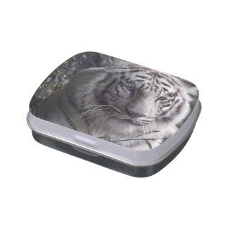 Primer blanco del tigre latas de caramelos