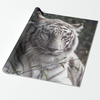 Primer blanco del tigre papel de regalo