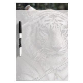 Primer blanco del tigre pizarra blanca