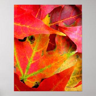 Primer colorido de las hojas de otoño posters