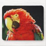 Primer con alas verde del pájaro del loro del Maca Alfombrillas De Ratones
