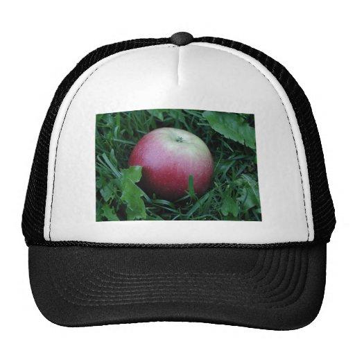 Primer de Apple Gorro