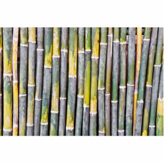 Primer de bambú del tallo fotoescultura vertical