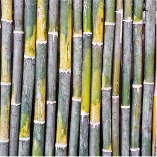Primer de bambú del tallo imán fotoescultura