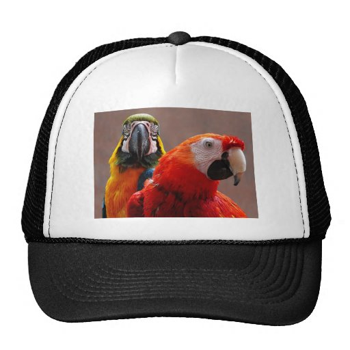 Primer de dos loros gorras