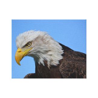 Primer de Eagle calvo Lona Estirada Galerías