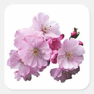 Primer de flores de cerezo calcomanía cuadradas personalizadas