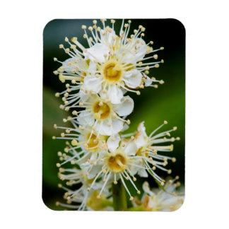 Primer de flores minúsculas iman rectangular