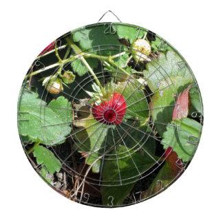 Primer de fresas orgánicas frescas