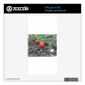 Primer de fresas orgánicas frescas en el Garde iPhone 4 Skins