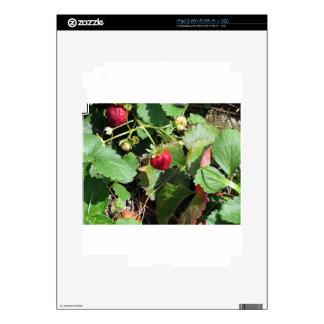 Primer de fresas orgánicas frescas skins para iPad 2
