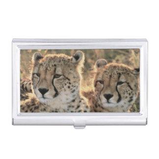 Primer de guepardos cajas de tarjetas de visita