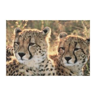 Primer de guepardos impresiones en lona